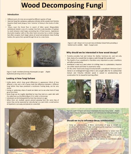 Wood Decomposing Fungi Poster Presentation by Geoffrey Liddell