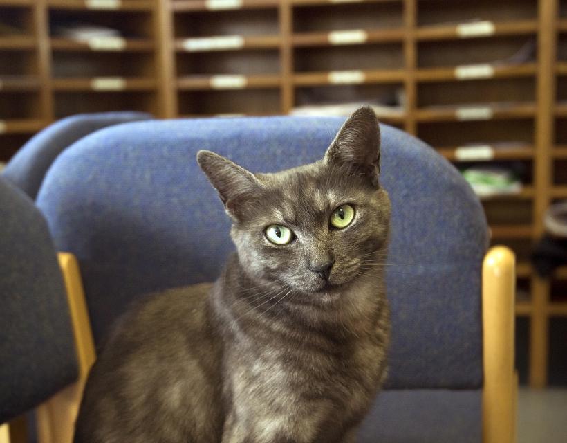 Teabag, the St Hilda's College cat