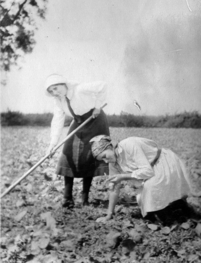 'Amputation of a Turnip' St Hilda's students' WWI vacation work in Northamptonshire