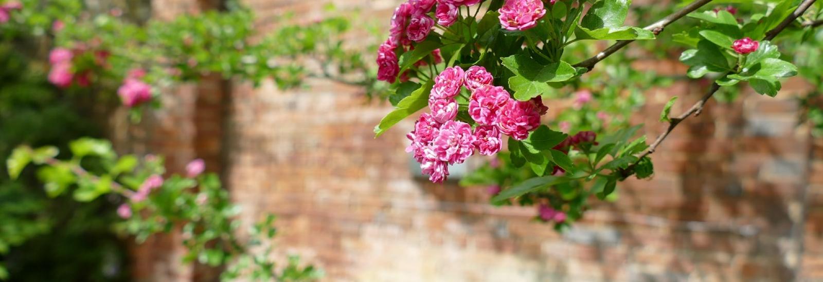 Virtual Strolls of St Hilda's Gardens