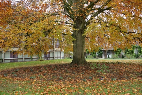 St Hilda's College grounds in autumn are full of seasonal colour.