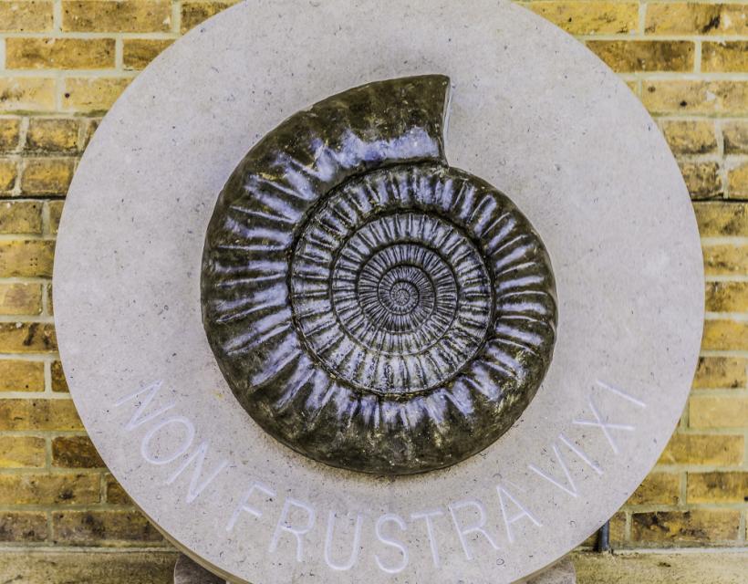 Ammonite - first symbol of St Hilda's Hall