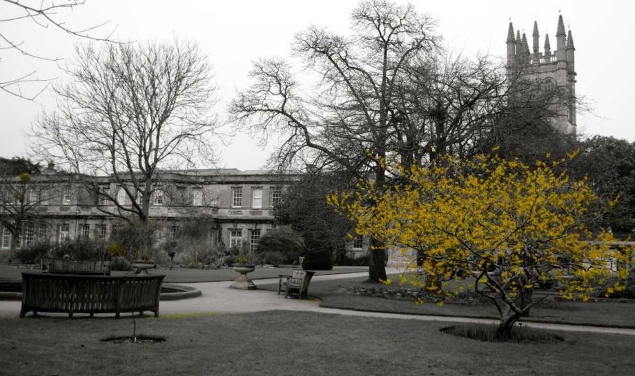 Plants, Brain and Imagination: Poetry Workshop, 1 December, Oxford Botanic Gardens and St Hilda's College