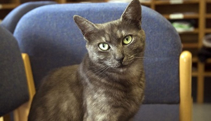 Teabag, the resident College cat, in the Porters' Lodge